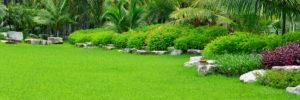 Broward Lawn